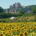 Sunflowers and castles